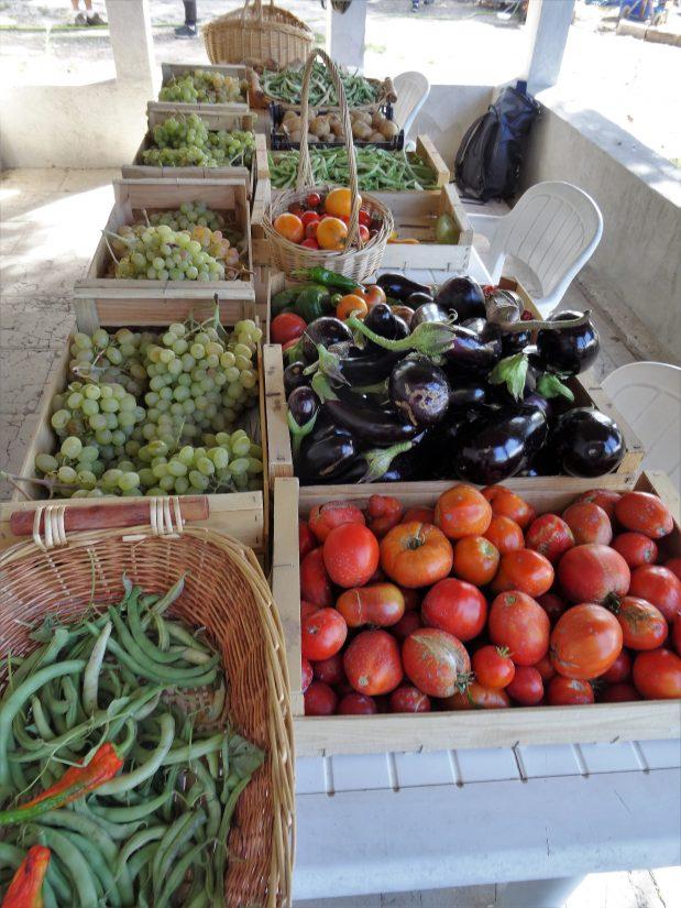 Que cultive-t-on dans un jardin partagé ? 3