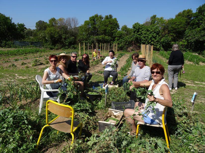 Que cultive-t-on dans un jardin partagé ? 4