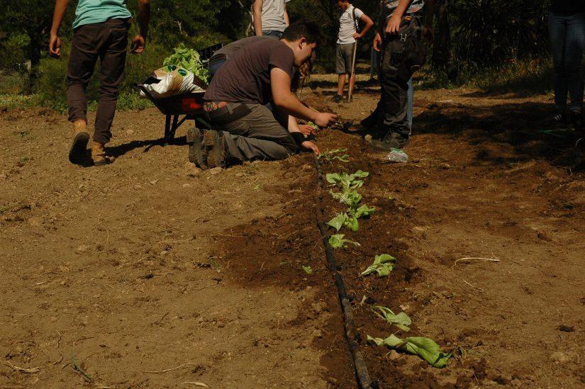 Un campus pionnier dans l'agriculture urbaine 2