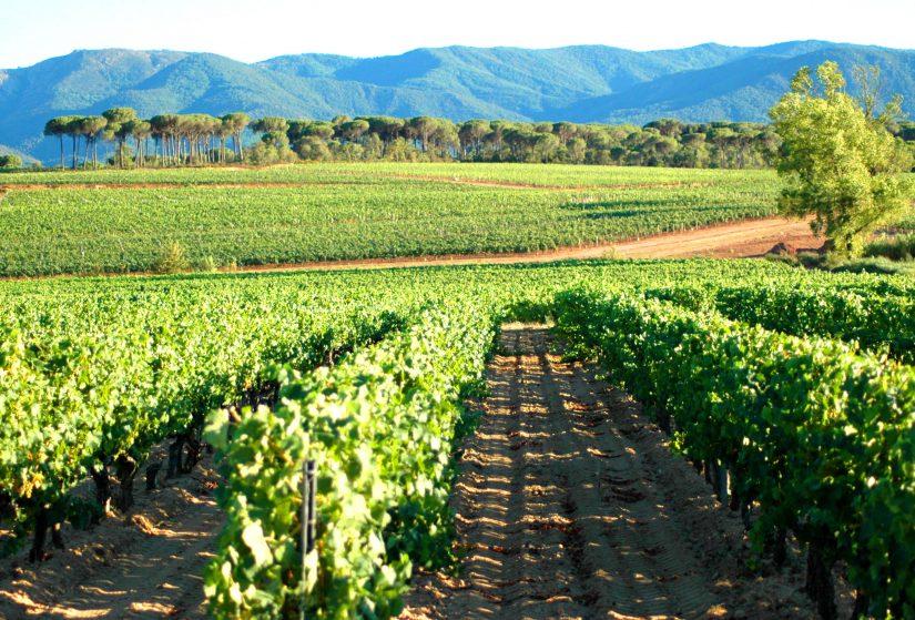 Réchauffement climatique : comment les viticulteurs provençaux s'adaptent 5