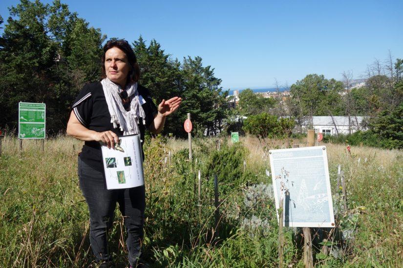 Les insectes, baromètre de la biodiversité urbaine: les papillons 5