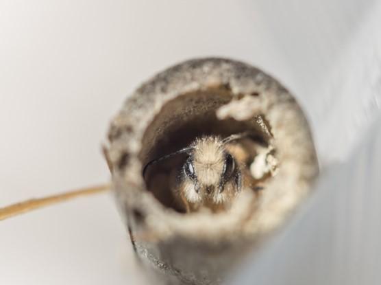 Biodiversité: ce qu'en disent les abeilles 1