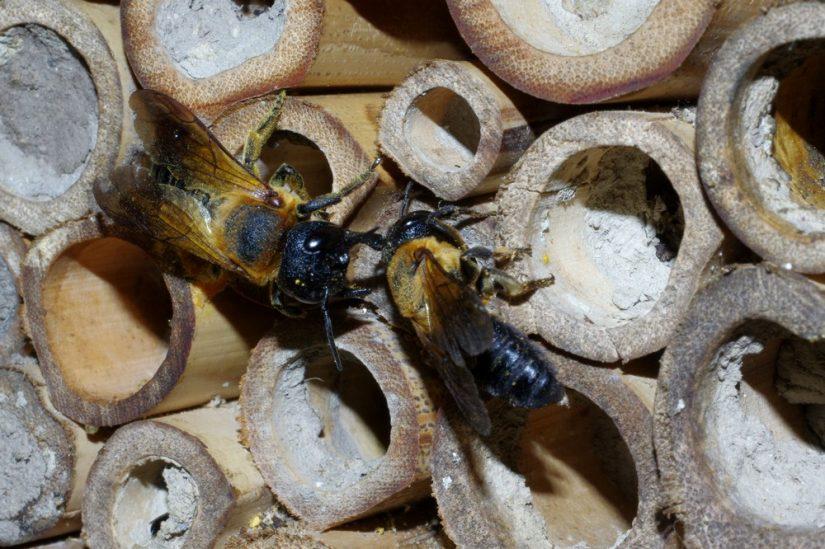 Biodiversité: ce qu'en disent les abeilles 3