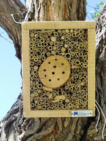 Biodiversité: ce qu'en disent les abeilles 4