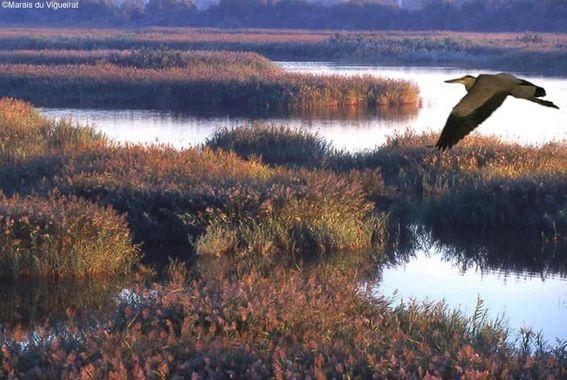 Les Marais du Vigueirat, 100% éco-responsables (ou presque 4