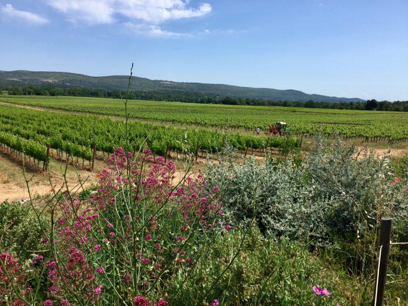 Les bonnes pratiques du domaine viticole de L'Escarelle 2