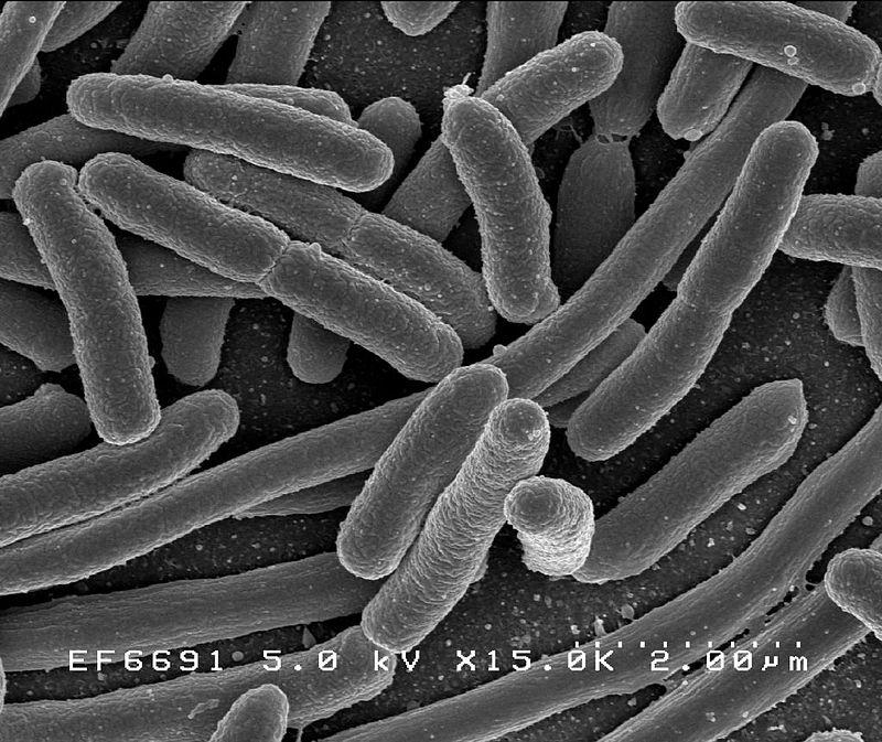 Il est comment toi, ton microbiote? 5