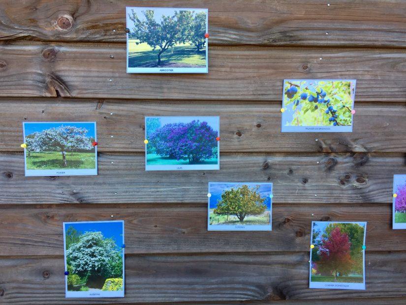La coopérative d'Estandon plante 670 arbres dans ses vignes 3