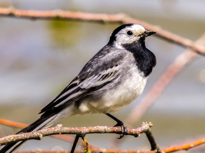 oiseaux-jardins-observatoire-lpo