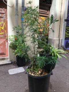 Avec les jardiniers urbains, le bitume se met au vert 4