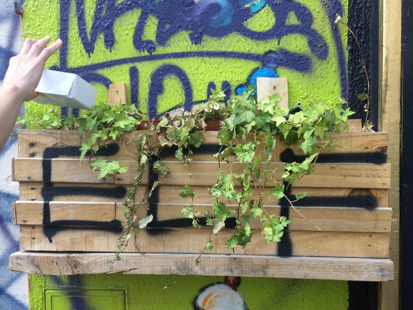 Avec les jardiniers urbains, le bitume se met au vert 6