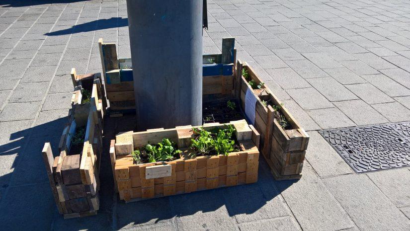 Avec les jardiniers urbains, le bitume se met au vert