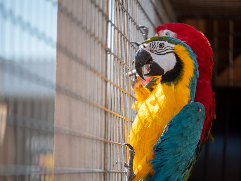 perroquet-animaux-zoo-refuge