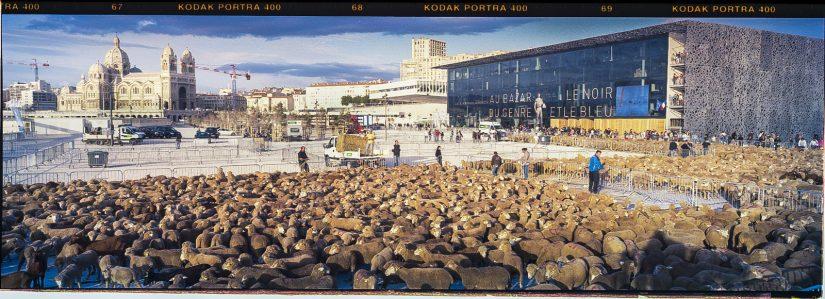 Festivals annulés: Arles prend le taureau par les cornes 6