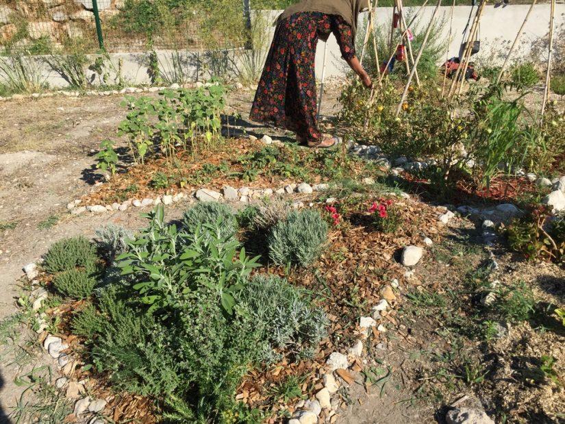 jardin-partage-jougarelle-marseille