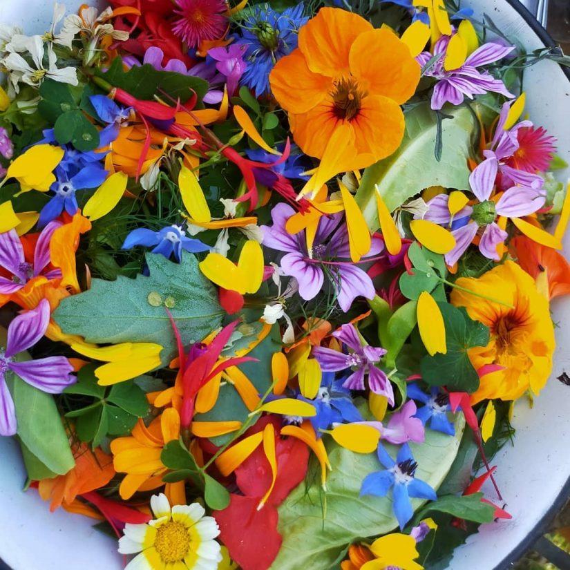 Les fleurs sauvages de Bigoud' 1