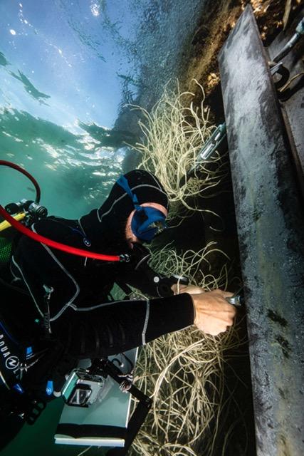Les récifs artificiels protègent-ils la biodiversité ? 2