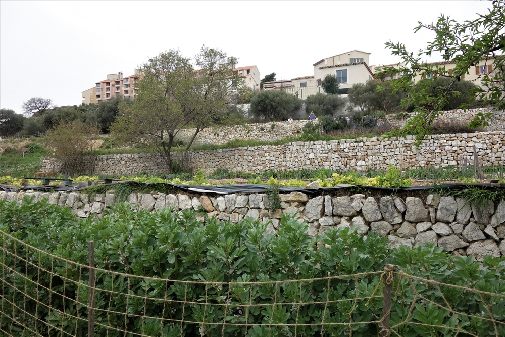 agriculture-urbaine-restanque-marseille