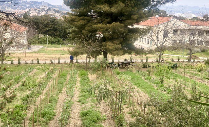 Jardin Marseilleveyre