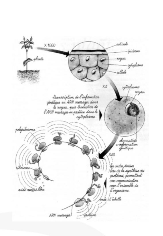 acide-amine-genodics