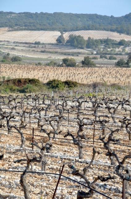 La vigne au défi du dérèglement climatique 2