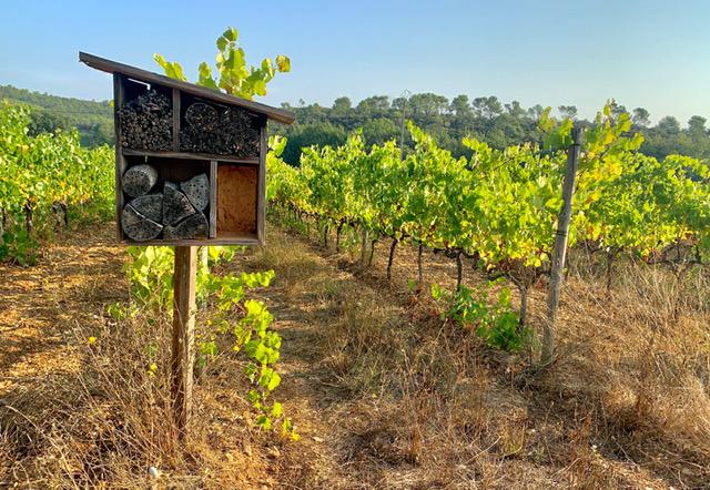 Duvivier, un modèle de viticulture durable 2